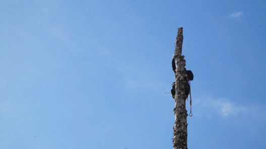 Baumfaeller-schwaben-garten